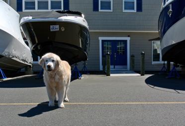 dog outside Brennan Boat storefront