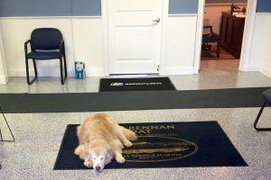 dog sleeping in office
