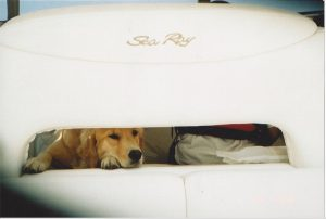 dog peeking through seat