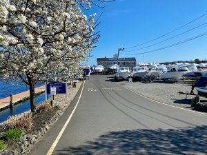 front of marina in spring